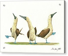 Three Blue Footed Boobies Acrylic Print by Juan Bosco