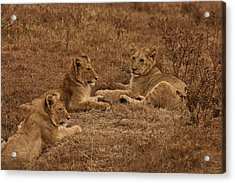 Three Brothers Acrylic Print by Miranda  Miranda