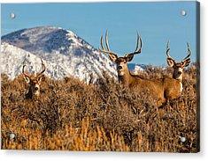 Three Bucks Crown  Acrylic Print