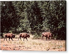 Three Buffalo On The Reserve Acrylic Print by Tamyra Ayles