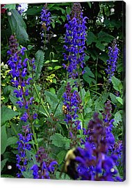Three Bumble Bees And Dephiniums Acrylic Print by Martin Morehead