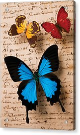 Three Butterflies Acrylic Print by Garry Gay