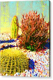 Three Cacti Acrylic Print by Amy Vangsgard