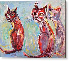 Three Cool Cats Acrylic Print