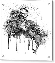 Three Cute Owls Black And White Acrylic Print by Marian Voicu