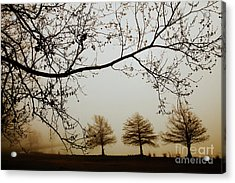Acrylic Print featuring the photograph Three Cypress In The Mist by Iris Greenwell