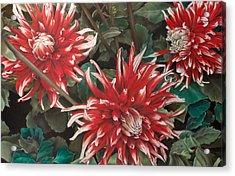 Three Dahlias Acrylic Print by Greg Stair