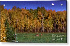 Three Deer And A Moon Acrylic Print