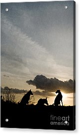 Three Dogs At Sunset Acrylic Print