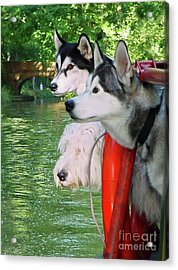 Three Dogs On A Boat Acrylic Print by Terri Waters