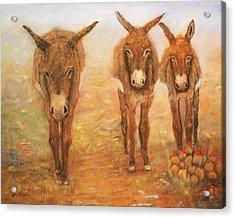 Three Donkeys Acrylic Print by Loretta Luglio