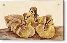 Three Ducklings Acrylic Print by Angeles M Pomata