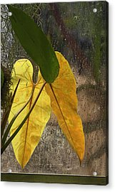 Acrylic Print featuring the photograph Three Exotic Leaves by Viktor Savchenko