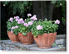 Three Flower Pots Acrylic Print by Deborah  Crew-Johnson