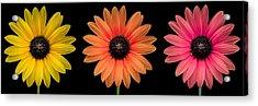 Three Flowers Acrylic Print by Hudson Marsh