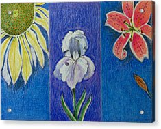 Acrylic Print featuring the drawing Three Flowers by Patricia Januszkiewicz