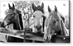 Three Horses Acrylic Print by Brian Foxx