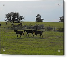 Three Horses Acrylic Print by Rebecca Cearley