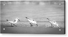 Acrylic Print featuring the photograph Three Hungry Little Guys by T Brian Jones