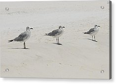 Three In A Row Acrylic Print by Beverly Hammond