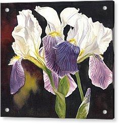 Three Irises Acrylic Print by Alfred Ng