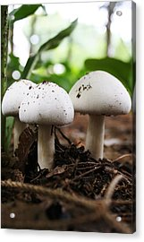 Acrylic Print featuring the photograph Three Is Company by Bruce Bley
