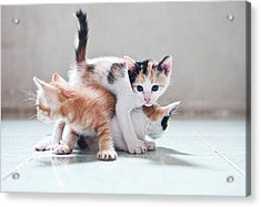 Three Kittens Acrylic Print by Photos by Andy Le