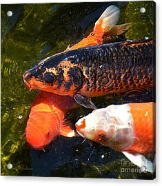 Acrylic Print featuring the photograph Three Koi Waiting by Susan Wiedmann