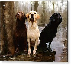 Three Labs Acrylic Print