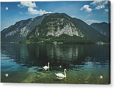 Three Lake Hallstatt Swans Acrylic Print
