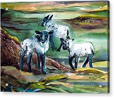 Three Lambs Acrylic Print by Mindy Newman