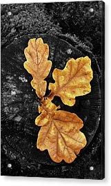Three Leaves On Black Acrylic Print