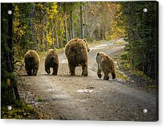 Three Little Bears And Mama Acrylic Print