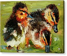 Three Little Ducks Acrylic Print