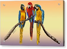 Acrylic Print featuring the painting Three Macaws Hanging Out by Thomas J Herring