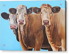 Three Moosketeers Acrylic Print by Laura Carey
