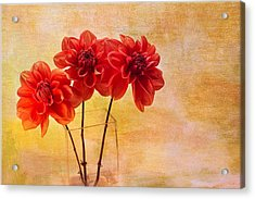 Three Orange Dahlias Acrylic Print by Rebecca Cozart