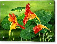 Three Orange Nasturtiums With Background Acrylic Print