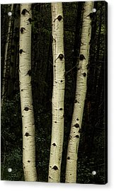 Acrylic Print featuring the photograph Three Pillars Of The Forest by James BO Insogna