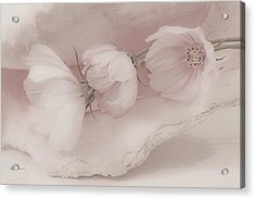 Three Pink Cosmo Flowers Acrylic Print