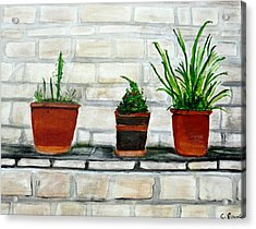 Three Pots Acrylic Print by Cathy Jourdan