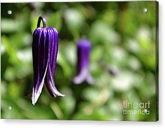 Three Purple Flowers- Leech Botanical Garden Acrylic Print