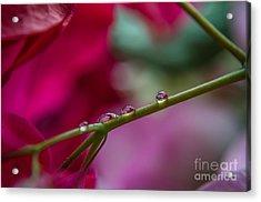 Three Reflecting Drops Acrylic Print