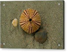 Three Shell Study Acrylic Print by Todd Breitling