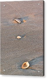 Three Shells Acrylic Print