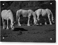Three Shires Acrylic Print