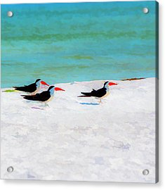 Three Skimmers Acrylic Print by Marvin Spates