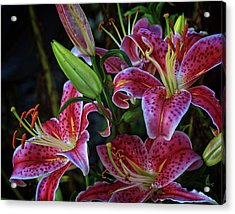 Acrylic Print featuring the photograph Three Stargazer Blooms by Robert Pilkington