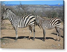 Three Stripes And Your Out Acrylic Print