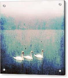 Three Swans Acrylic Print